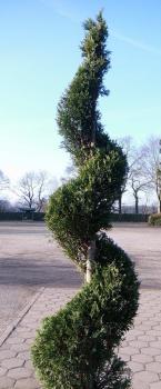 garten bonsai und formgeh lze direkt in unserer baumschule online kaufen seite 2 olaf ramcke. Black Bedroom Furniture Sets. Home Design Ideas